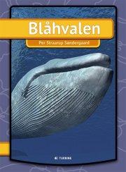 blåhvalen/der blauwal - bog
