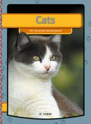 cats - bog