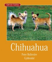 chihuahua - bog