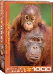 puslespil - eurographics - orangutang - 1000 brikker - Brætspil