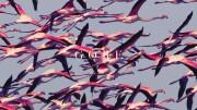 deftones - gore - Vinyl / LP