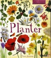 planter - bog