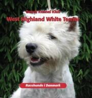 west highland white terrier - bog