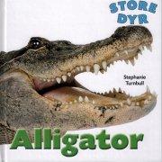 alligator - bog