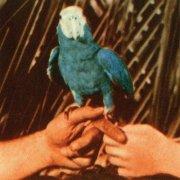 andrew bird - are you serious - Vinyl / LP
