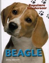 populære hunderacer - beagle - bog