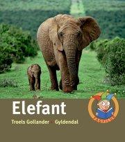 elefant - bog