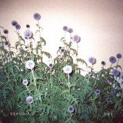 sekuoia - flac - Vinyl / LP