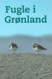 fugle i grønland - bog