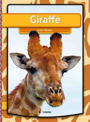 giraffe - bog