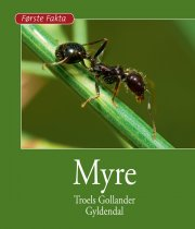 myre - bog
