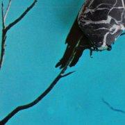 tangents - stateless - Vinyl / LP
