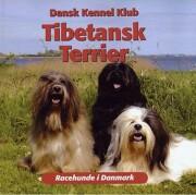tibetansk terrier - bog