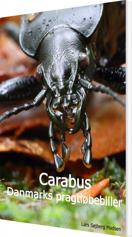 Carabus - Danmarks Pragtløbebiller - Lars Søjberg Madsen - Bog