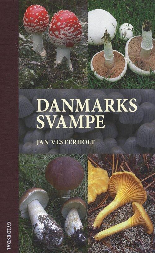 Image of   Danmarks Svampe - Jan Vesterholt - Bog