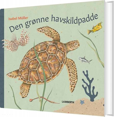 Den Grønne Havskildpadde - Isabel Müller - Bog