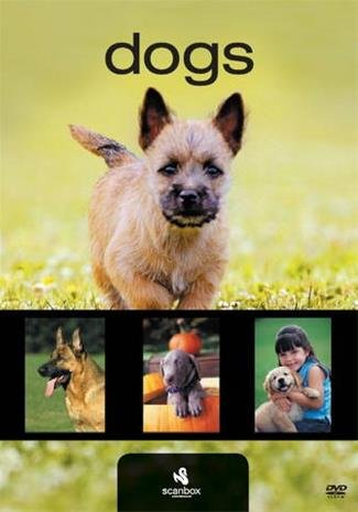 Dogs For Dummies - DVD - Film