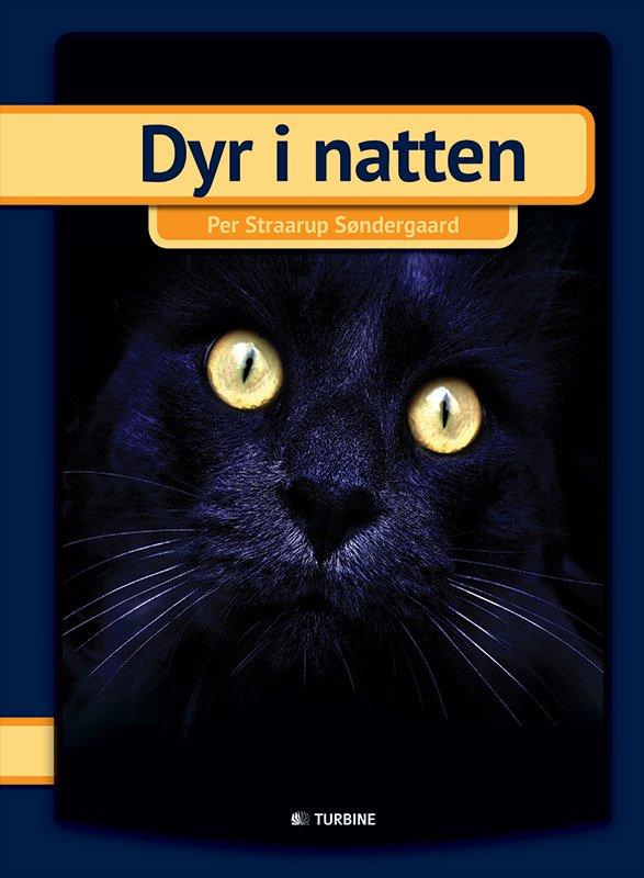 Image of   Dyr I Natten - Per Straarup Søndergaard - Bog