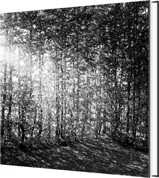 Billede af Et Foranderligt Monument - Christina Capetillo - Bog