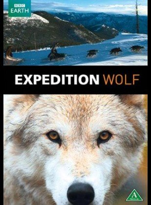 Image of   Expedition Wolf - DVD - Film