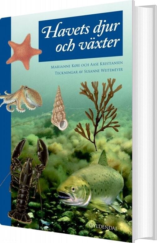 Billede af Havets Dyr Og Planter - Marianne Køie - Bog