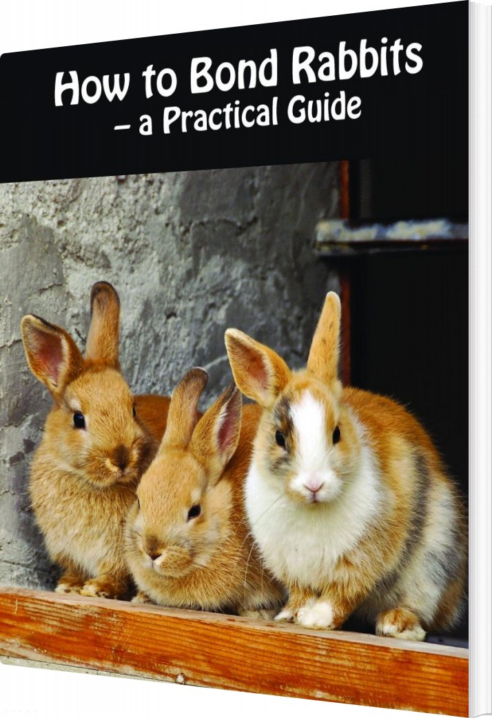 Image of   How To Bond Rabbits - A Practical Guide - Rebekka Faial - Bog