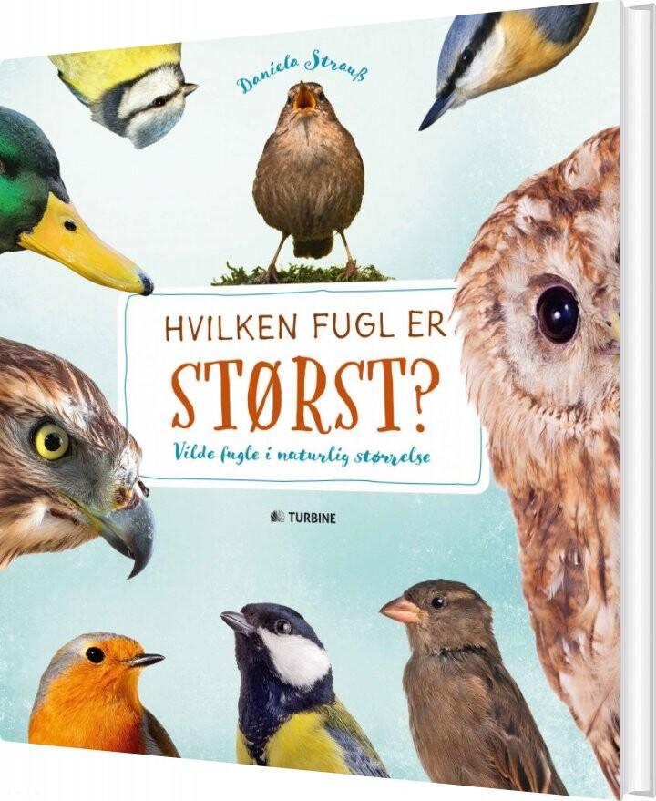 Hvilken Fugl Er Størst? - Daniella Strauss - Bog