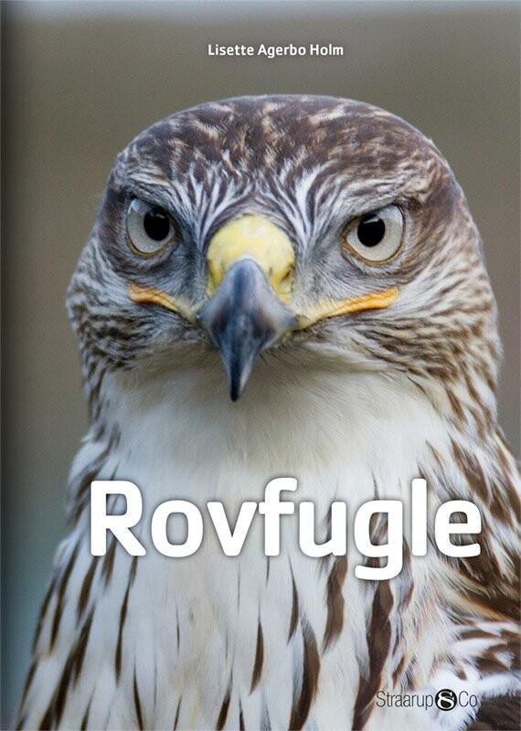 Billede af Rovfugle - Lisette Agerbo Holm - Bog