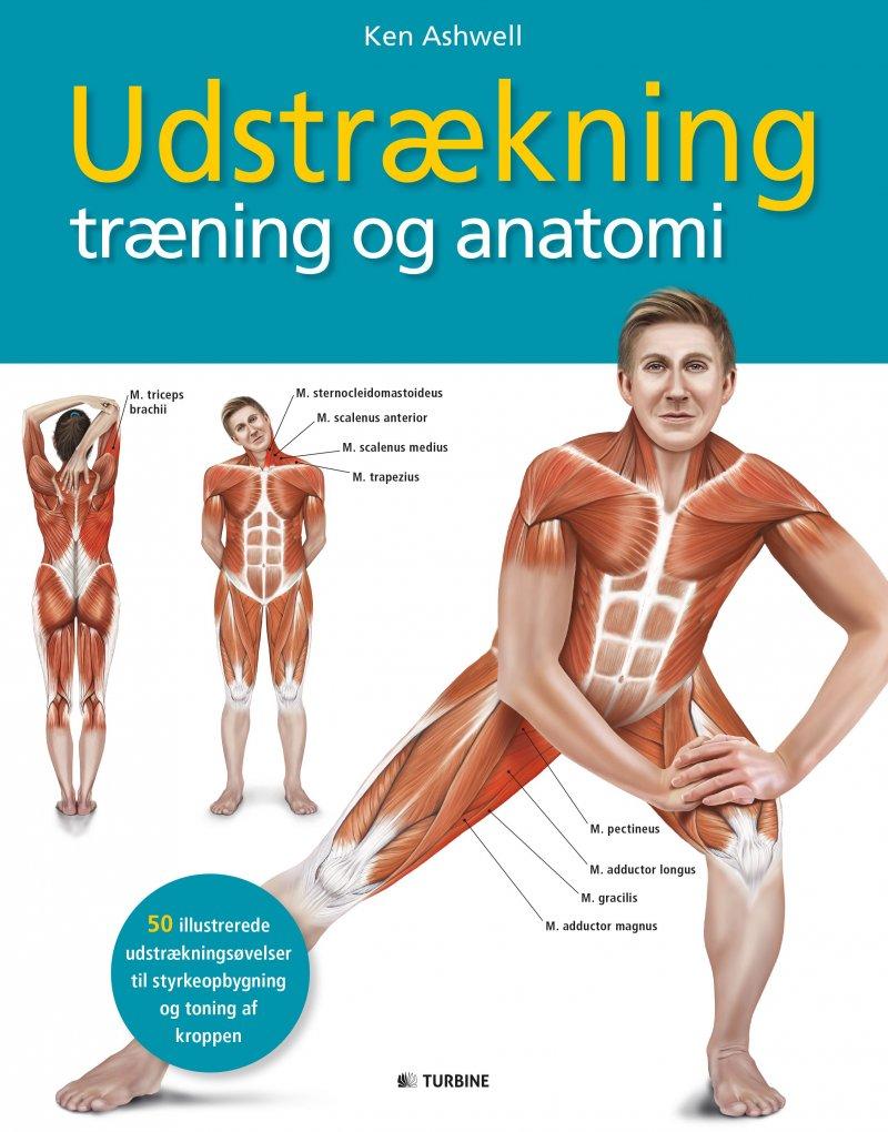 Image of   Udstrækning, Træning Og Anatomi - Ken Ashwell - Bog